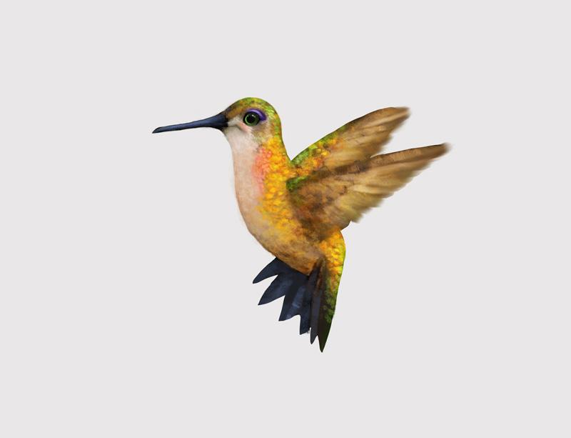 Hummingbirds-008.jpg