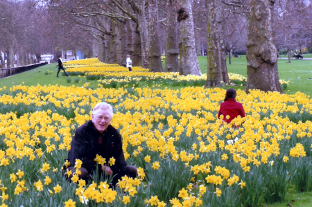 My Affair with Daffodils 2 Project1.png