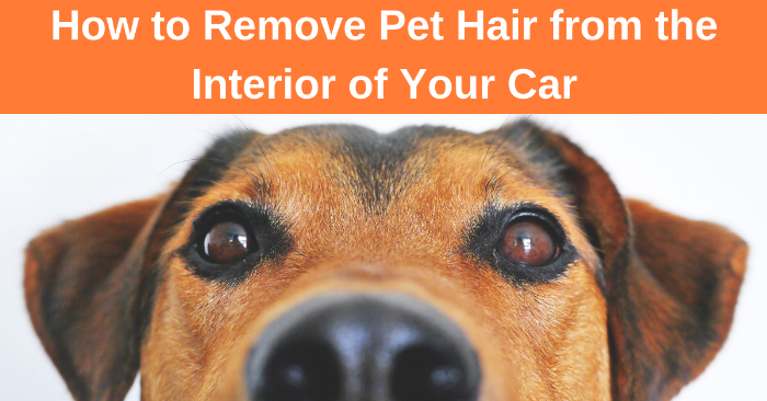 How to remove pet hair from the interior of your car
