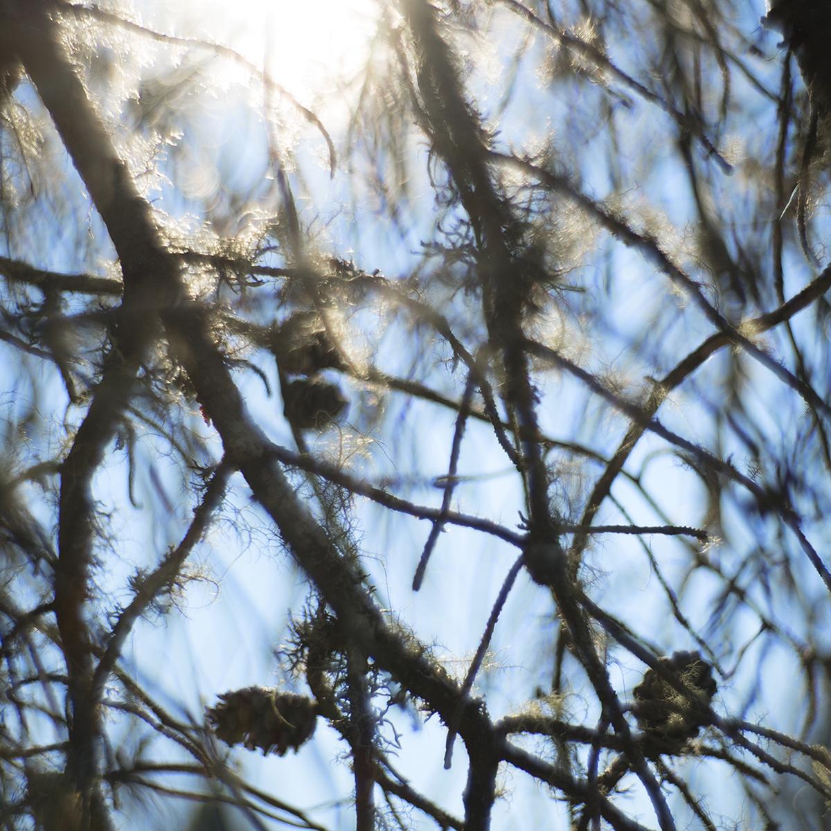 05_pine cone.jpg