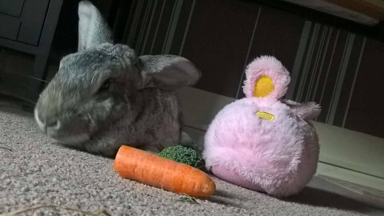 Wombat and Pink Rabbit.jpg