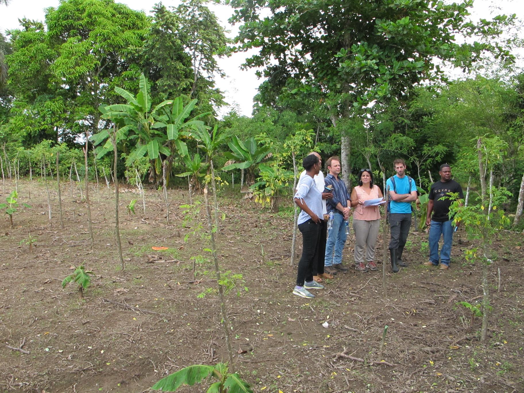 Visite d'une parcelle de 0,25 ha appartenant à un producteur de cacao dominicain partenaire du projet cacao Forest et volontaire pour participer au REP. Le modèle agroforestier n°3 est en train d'être installé sur cette parcelle. On peut y voir l'ombrage temporaire (bananier) et permanent (Glyricidia). Chaque modèle sera suivi pendant au moins 4 ans.