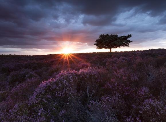 Dunwich & Westleton - The sun rises spectacularly over Westleton Heath