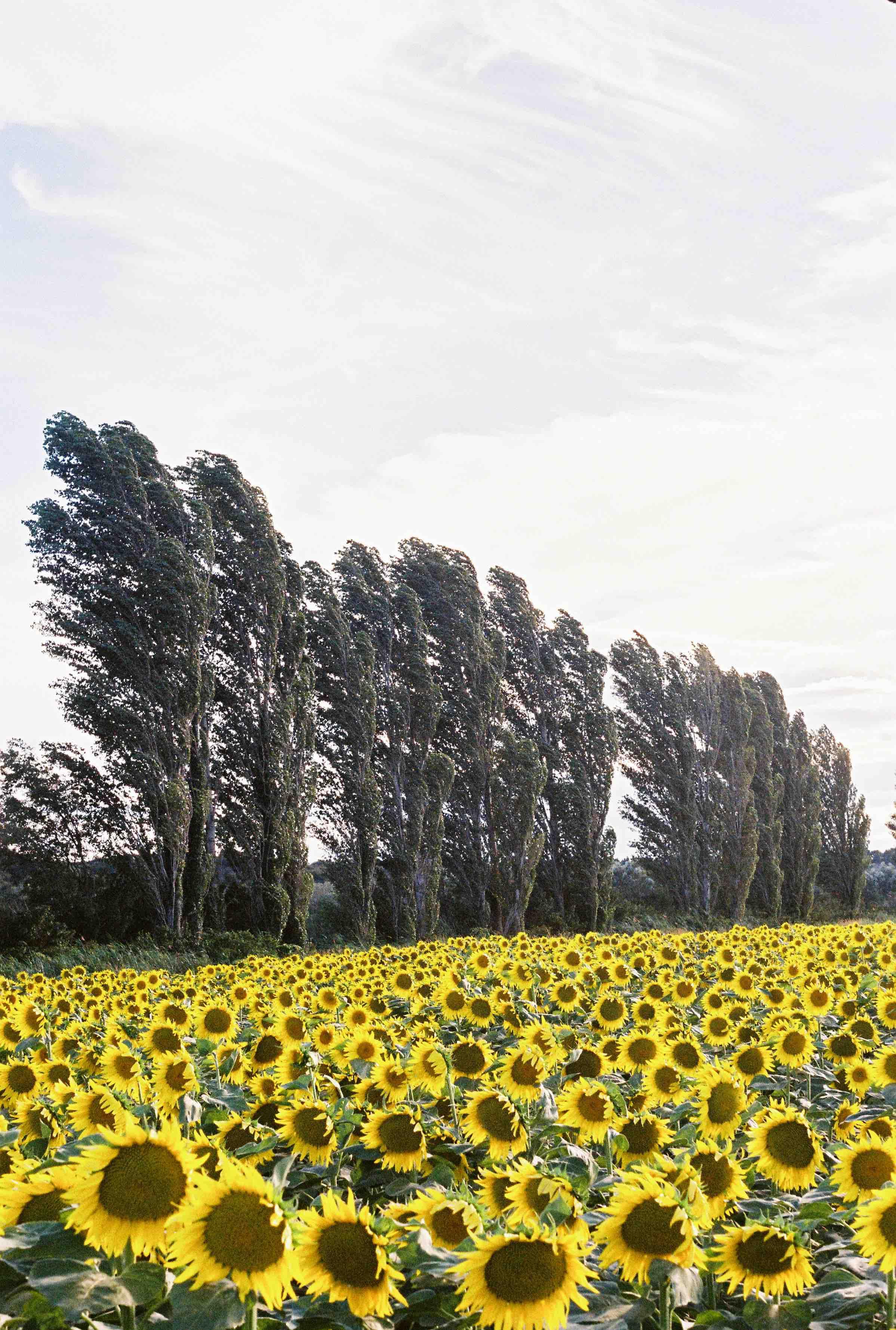 Provence + pepe-330.jpeg