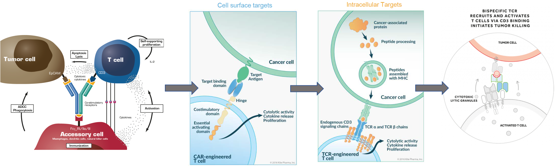 Figure 1: Harnessing the power of the immune system - From bispecific antibodies [4] to CAR-Ts [5] and TCRs [5] up to bispecific TCRs [6]
