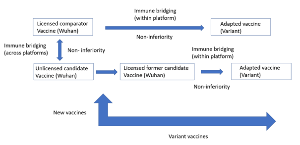 """Figure 1:Schematic overview of immune bridging pathway for new COVID-19 vaccines (Wuhan) and """"adapted"""" variant vaccines"""