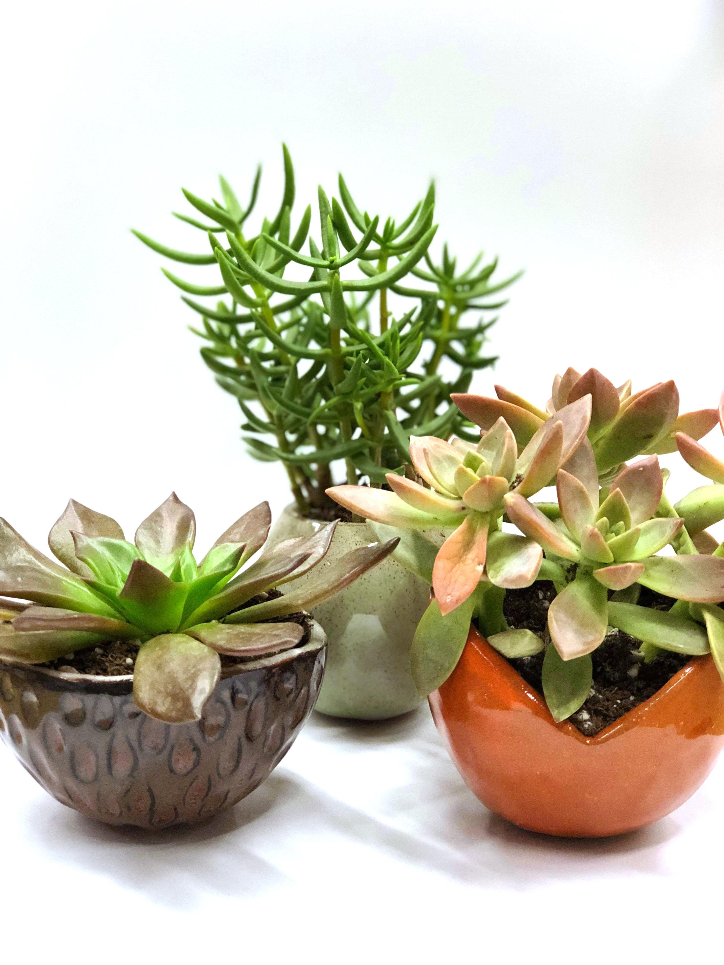 plantchildren.jpg