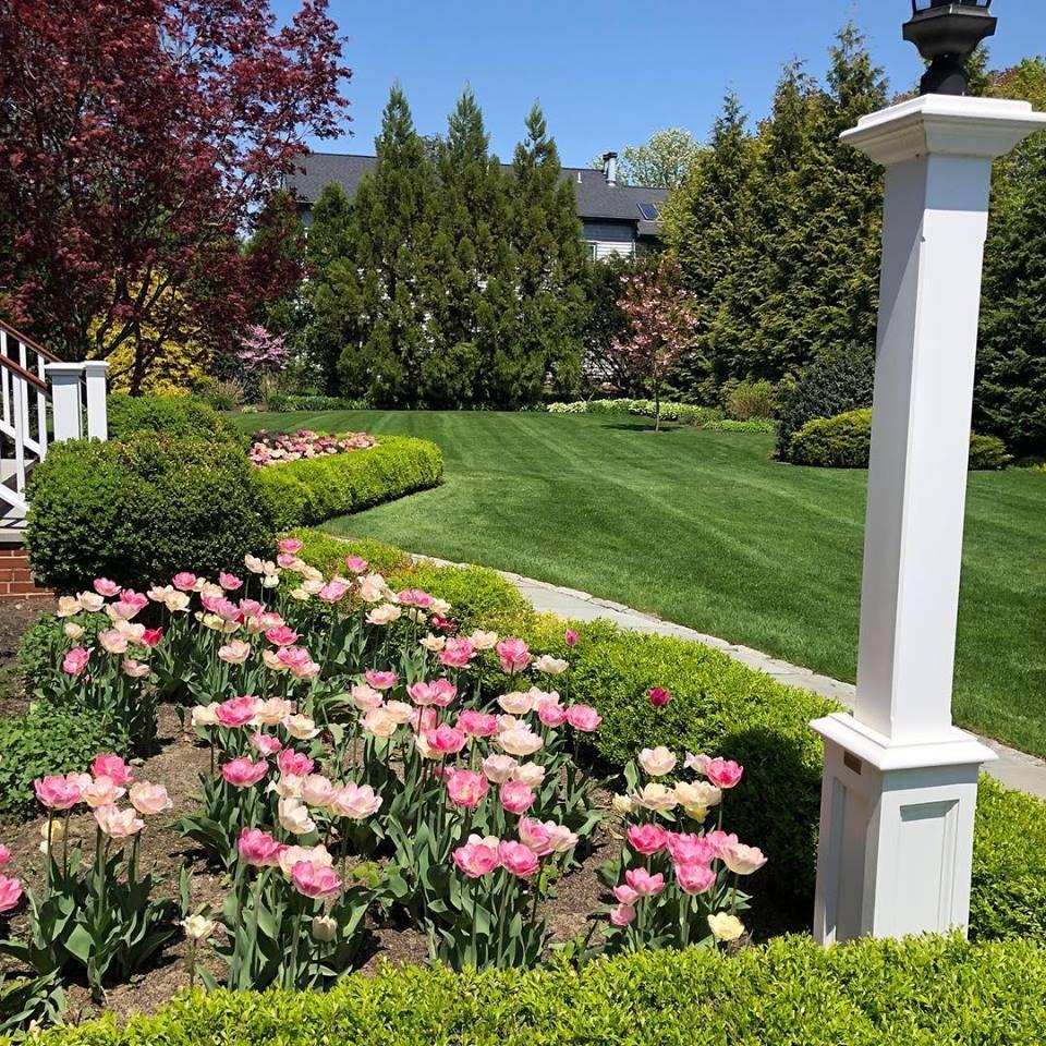 tulips-barrington-ri.jpg