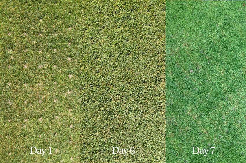 Aeration-Recovery-image.jpg