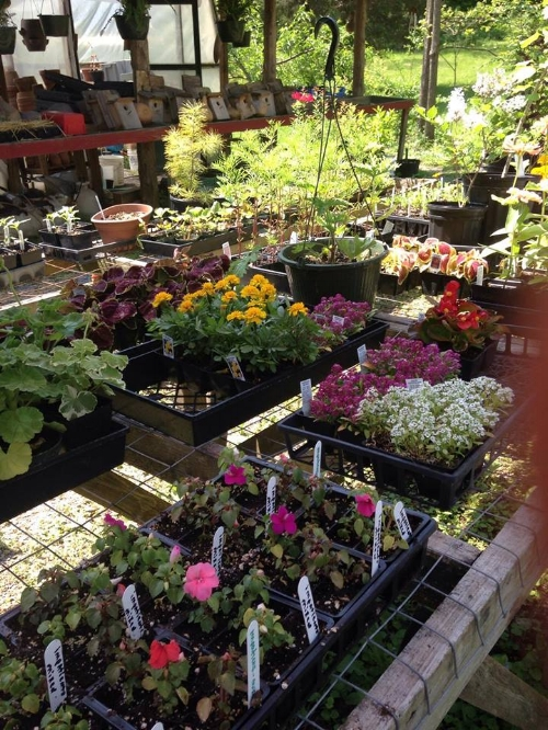 Hardin Mountain Organics Maynardville, TN 37807 NON Member