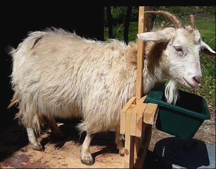 Cashmere Goats for Beginners Seminar -- An Intro to raising goats. For more information visit www.mtnhollow.com or call 423-869-8927
