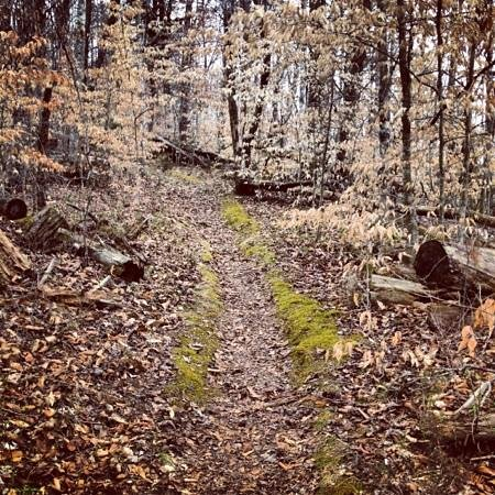Join one of the Big Ridge Park Rangers for a refreshing 1.5-2 hour morning hike along beautiful wooded paths around Big Ridge Lake. Please be prepared with drinking water and sturdy hiking shoes.  Meet at:    Park Office
