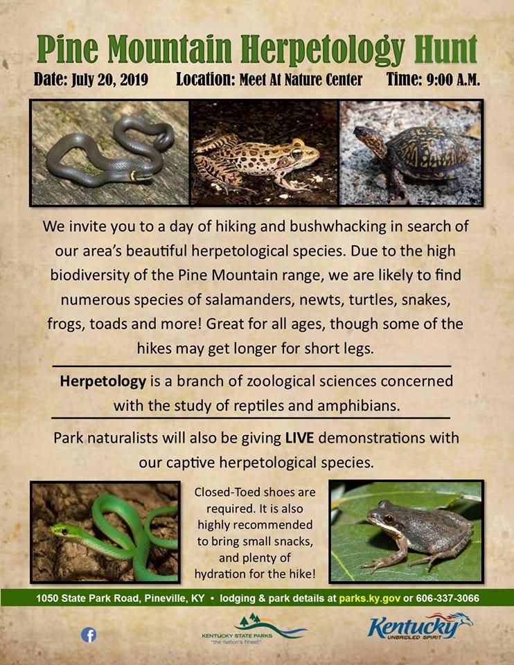 herpetology hunt.jpg