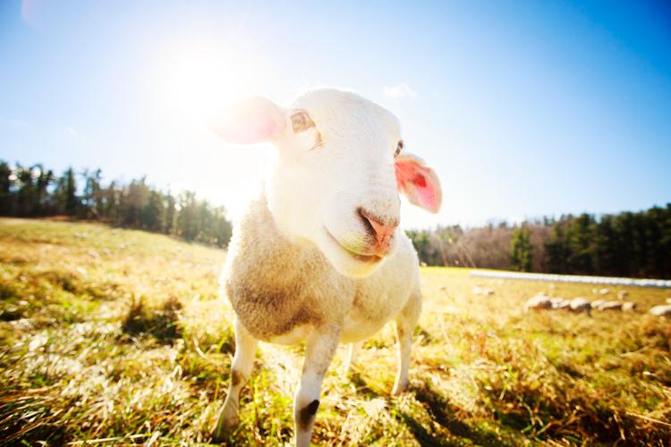 131118_Farm_Animals_0011_edit.jpg