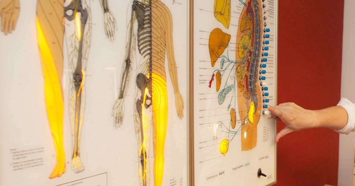 Bord met zenuwbanen