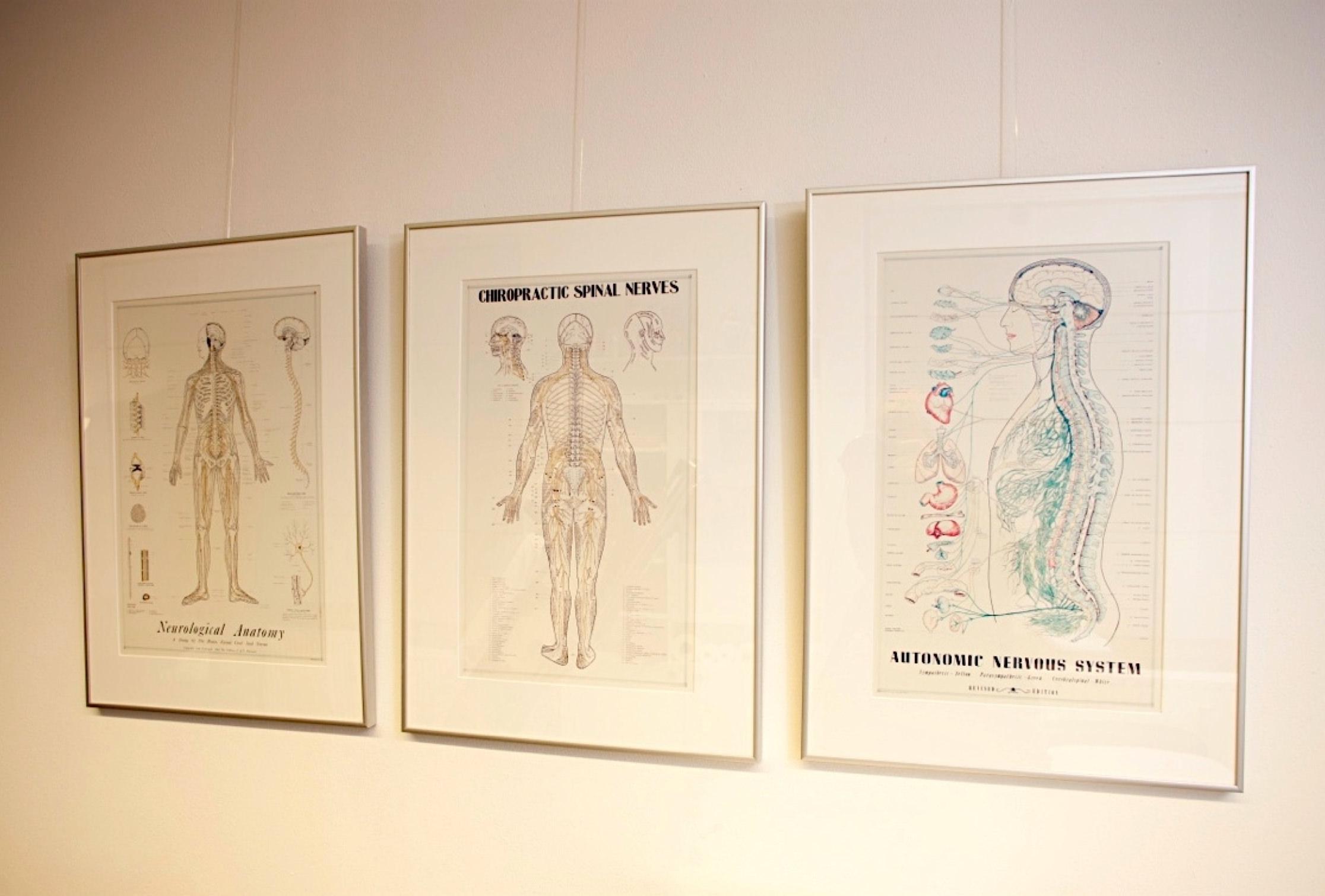 posters zenuwbanen en wervelkolom