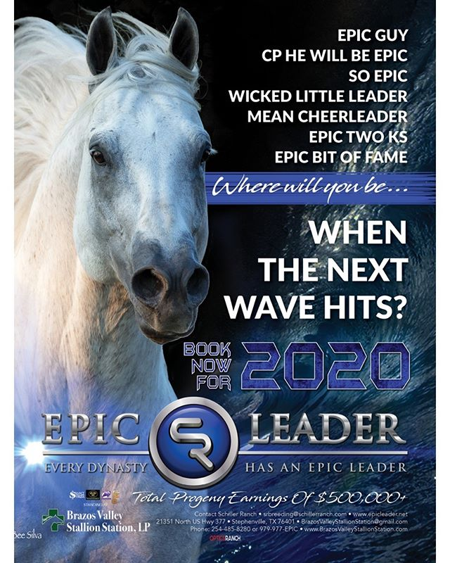 HIS 2020 BOOK IS NOW OPEN! For more information, contact Brazos Valley Stallion Station, 254-485-8280, BrazosValleyStallionStation@gmail.com, www.EpicLeader.net, 979-977-EPIC.  #bhn #barrelhorsenews #kassiemowry #DDBHC™ #SelectStallionStakes #barrelracer #horsetraining #aqha #apha #horsesofinstagram #barrelracer #barrelhorses #barrelracing #equineathlete #horsemanship #aqhaproud #performancehorse #rodeo #quarterhorses #equine #ranchhorse @kkschiller @schillerranch @mowrykassie