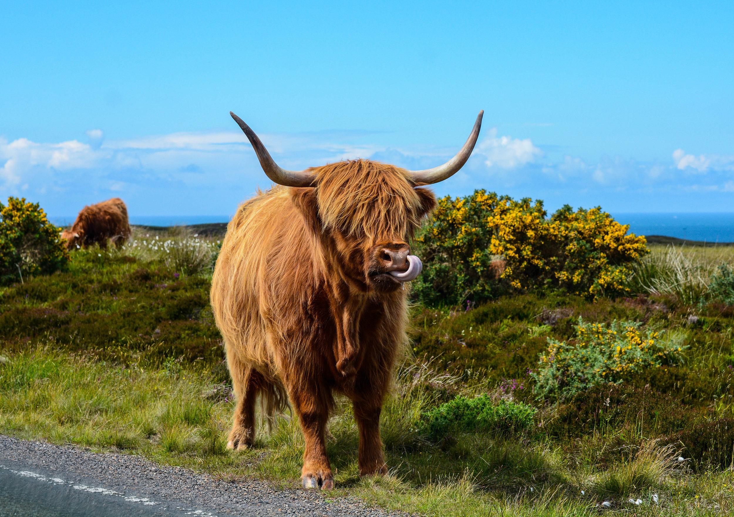John O Groats, Scotland