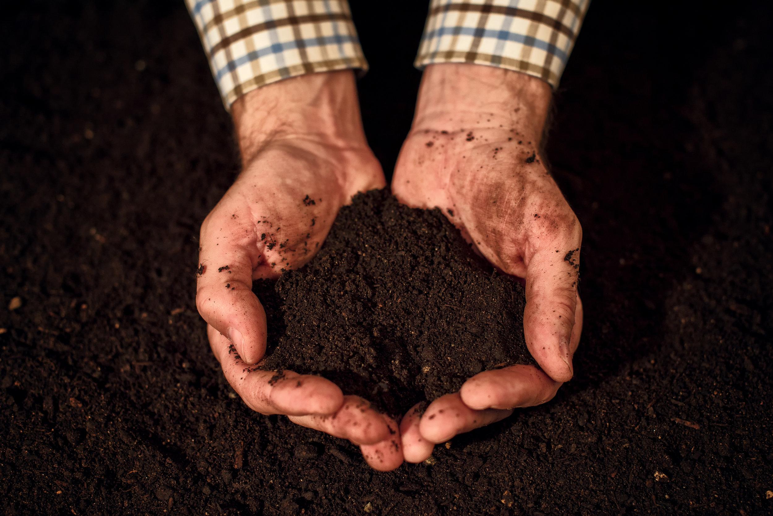 quality-soil-in-male-gardener-hands-P2E66GS.jpg