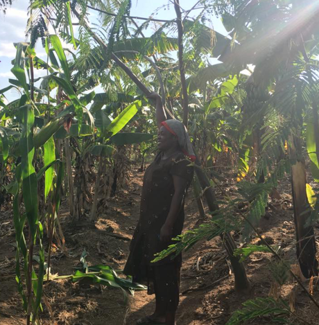 The Group Leader holds a two-year old tree intercropped in a banana plantation.