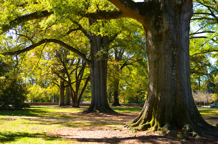 - Visit the project overview page for more details on Duke University's urban forestry work, which now comprises over 6,400 trees in 7 cities.
