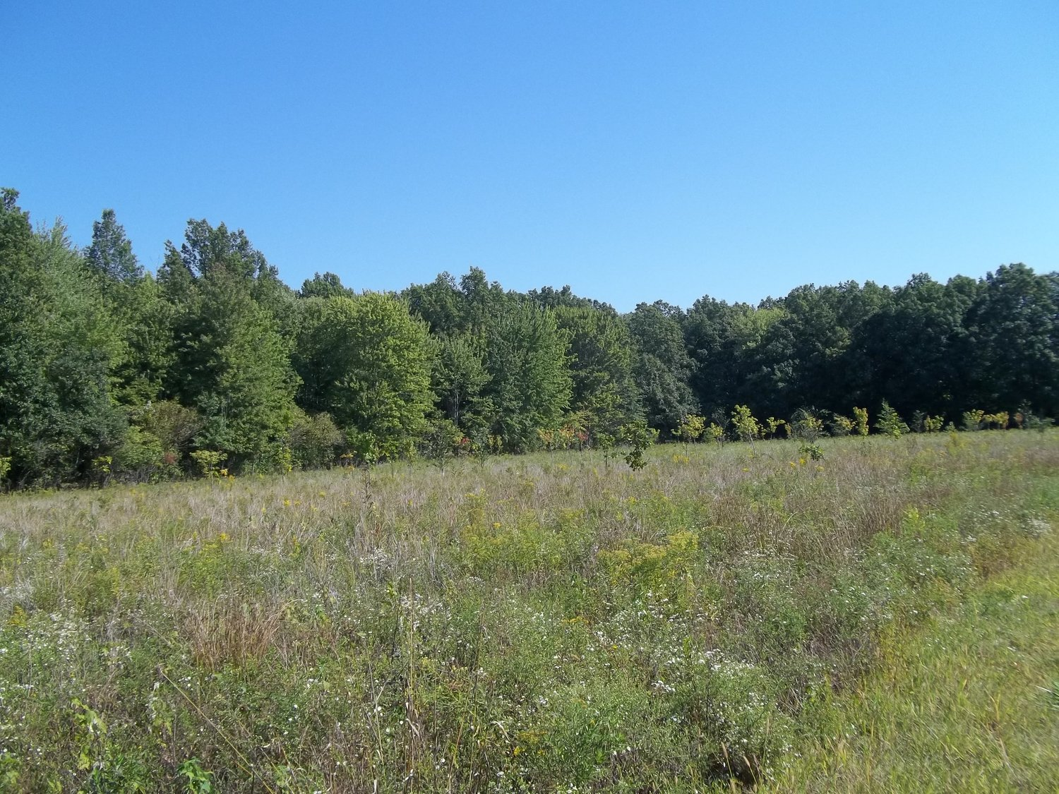 - Visit the project overview page for more details on Oberlin College's afforestation efforts of agricultural land in the North Fields area near campus.