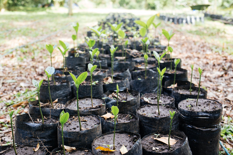 - Visit the project overview page for more details on UGA Costa Rica's work in reforesting agricultural fields in San Luis, which contributes to enhancing connectivity along the Bellbird Biological Corridor.