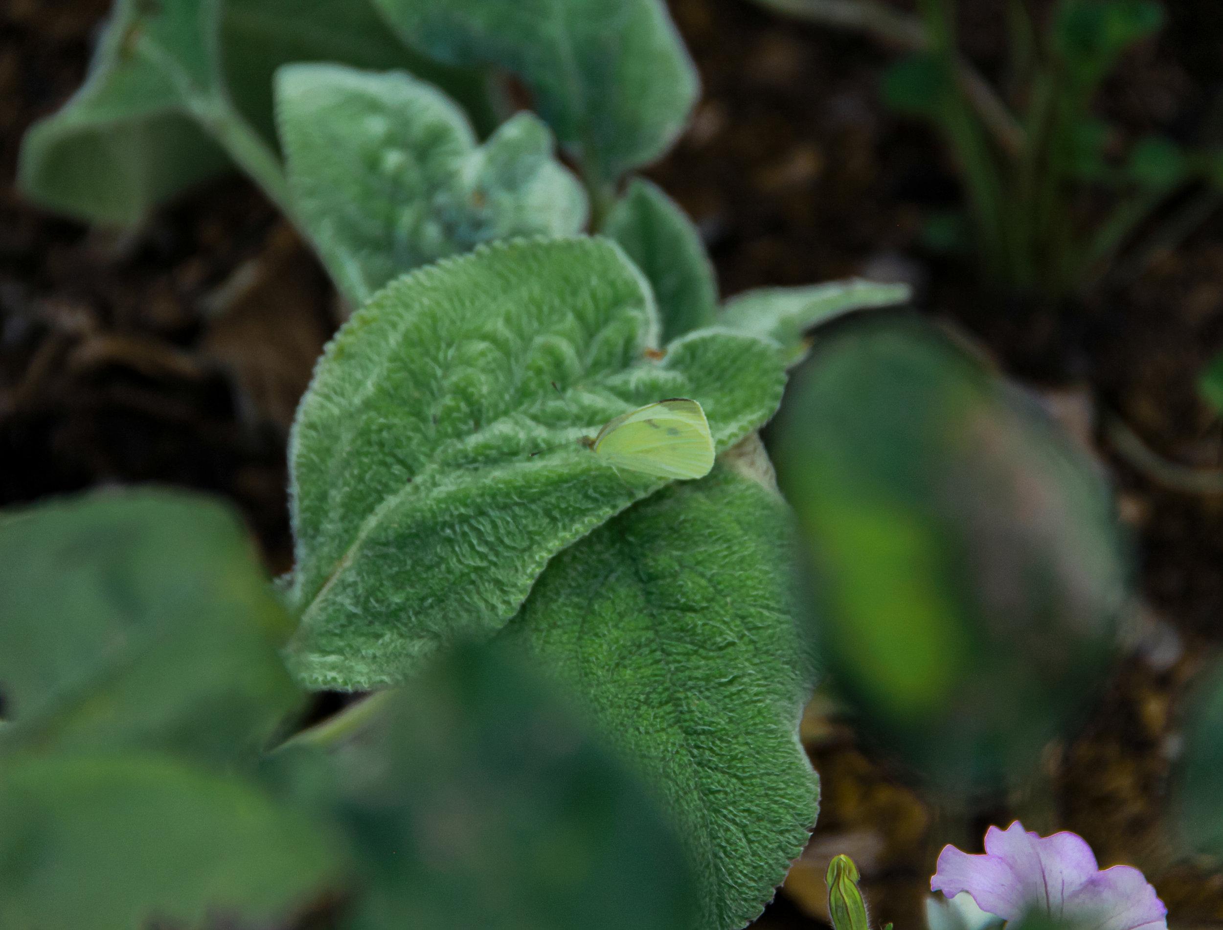 moth leaf garden final.jpg