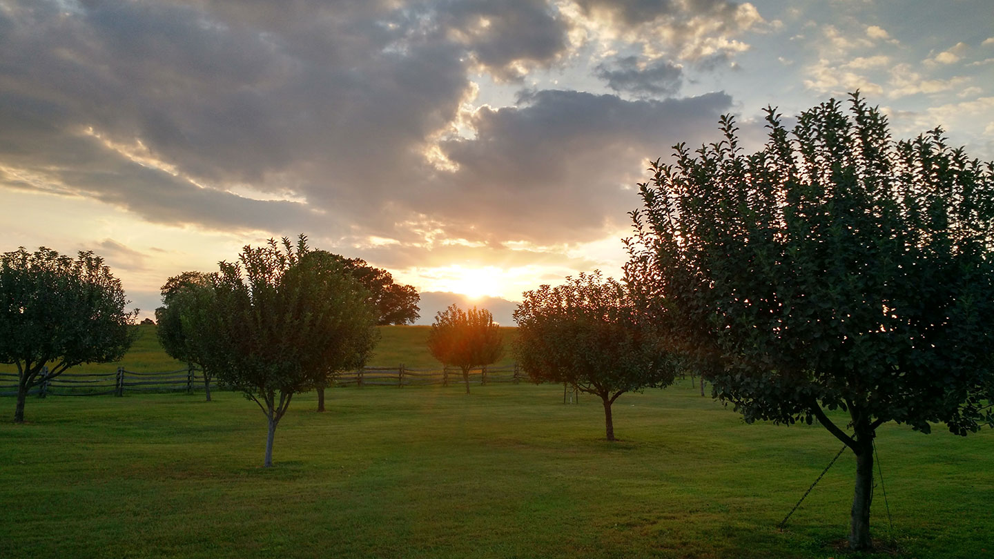 OrchardSunset.jpg