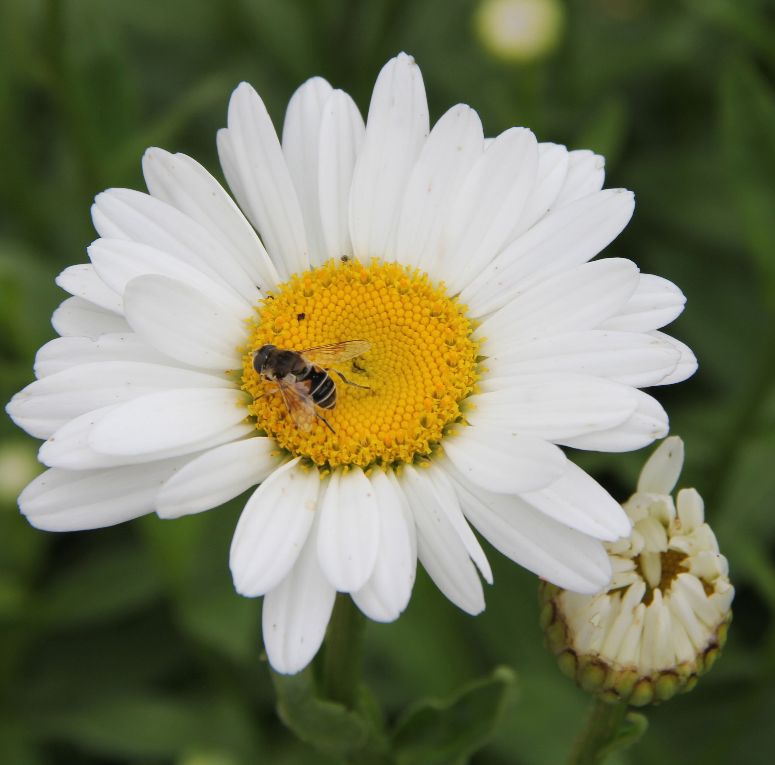 Tips for supporting native pollinators in your area: -
