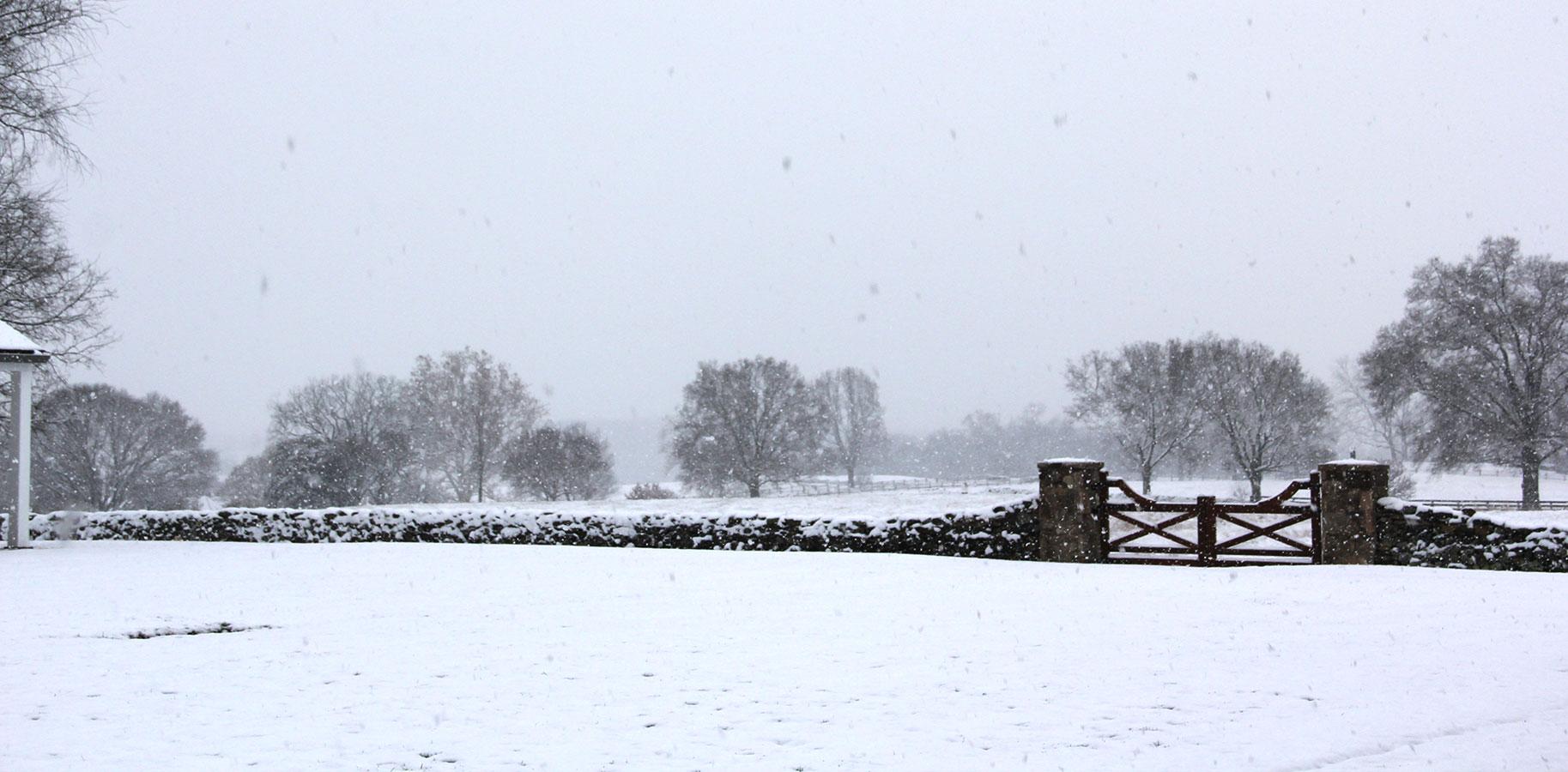 A snowy scene at Oak Spring