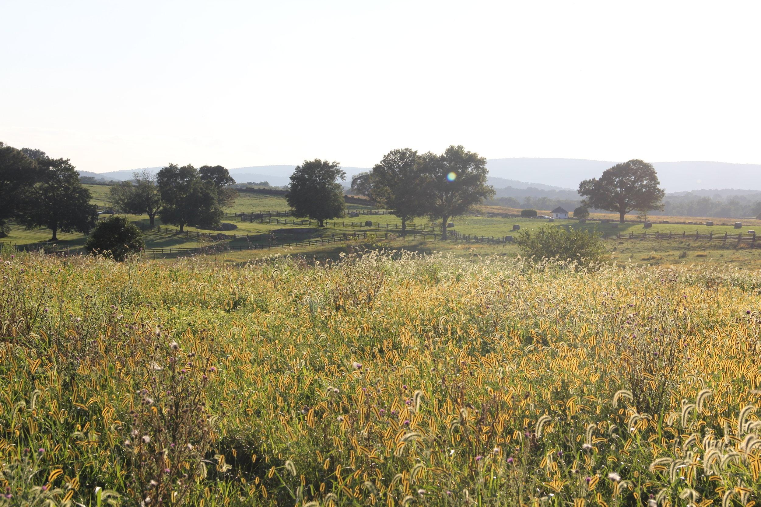 Walking Trail View