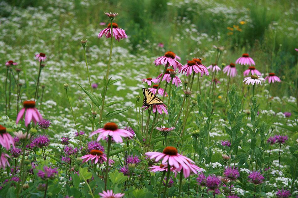 Photo compliments of Larry Weaner Landscape Associates