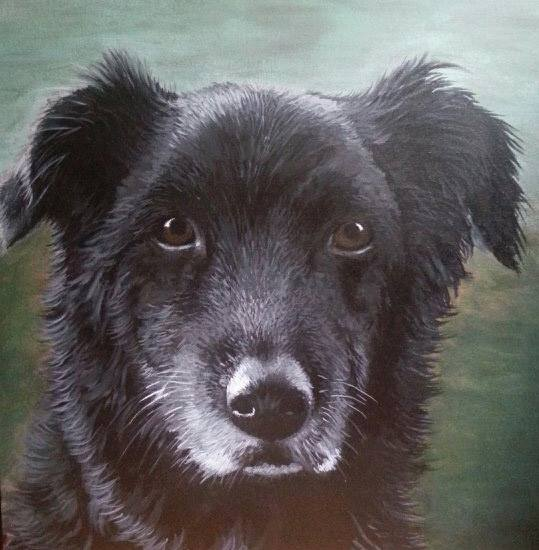 "Shakori  , Acrylic on Canvas, 24""x24"""