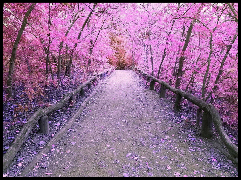 Central Path.jpg