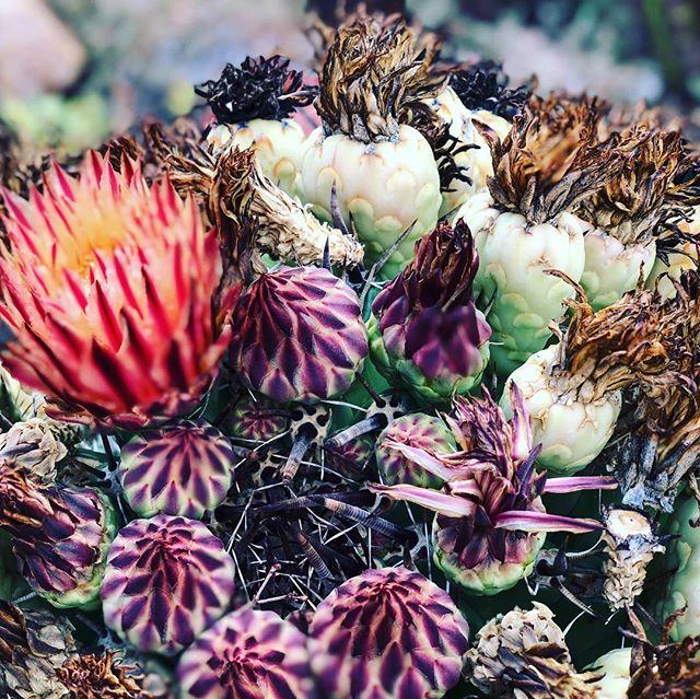 Karoo Blooms 🌵