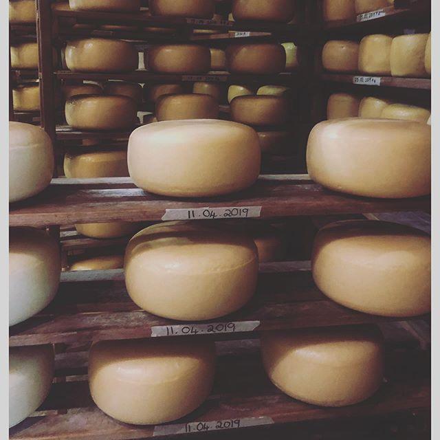 Cheese Library  #royalsontheshelf  #gaysguernseydairy  #princealbertkaroo  #artisinalcheese  #a2milk