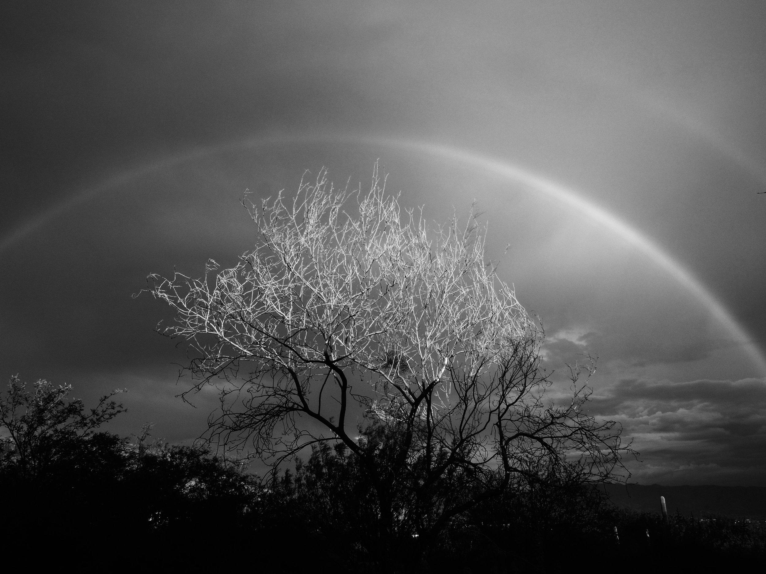Dead Tree with Rainbow
