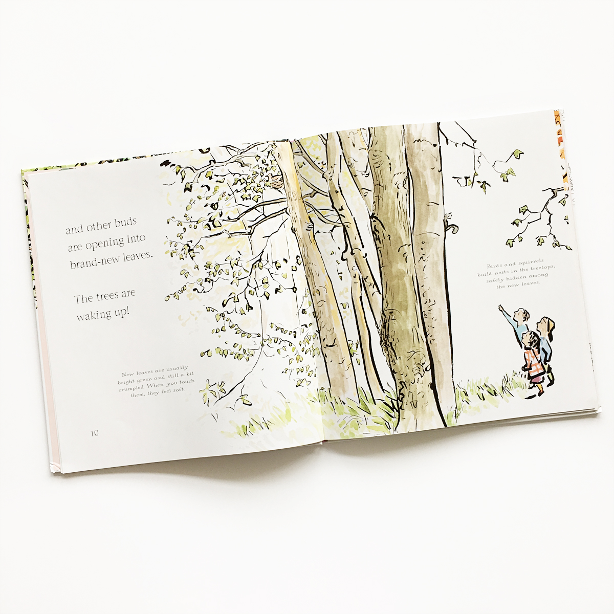 The Things That I LOVE about TREES | Little Lit Book Series