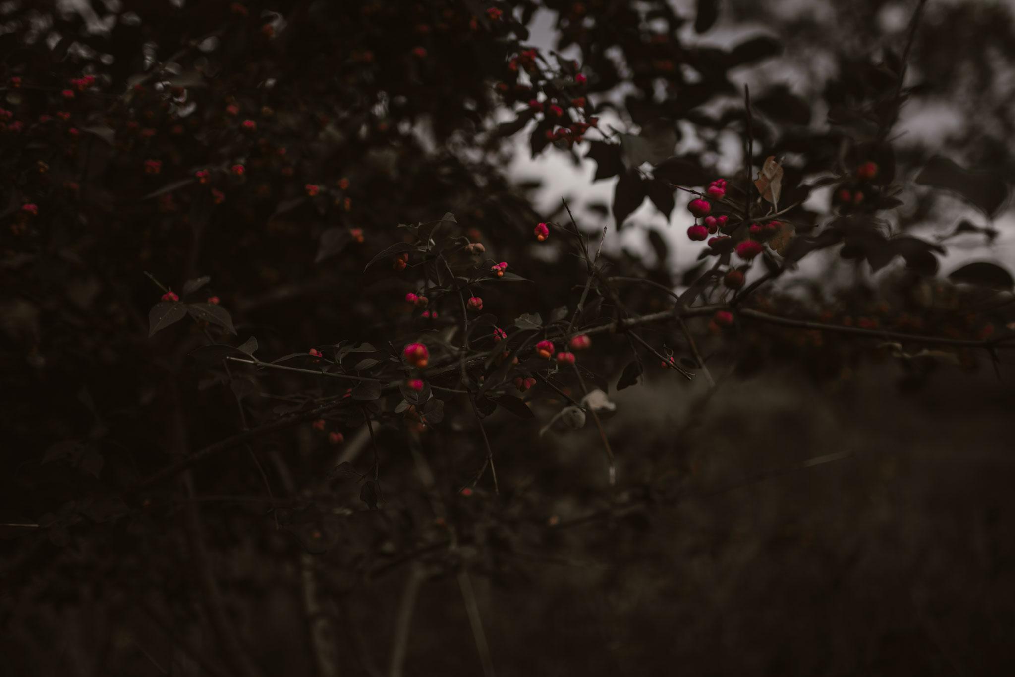 pale-witch-152fb.jpg