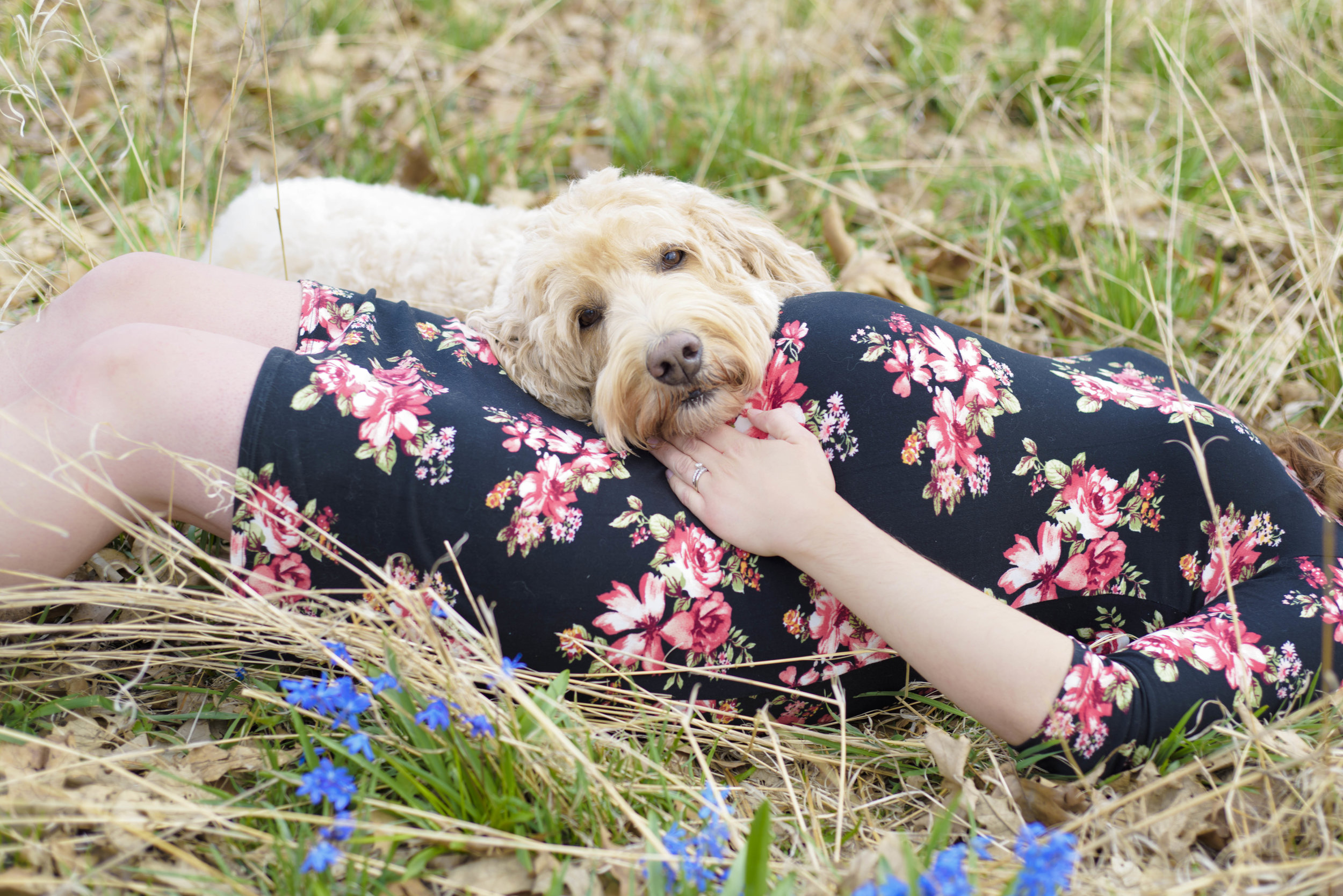 chicago-maternity-photographer-goldendoodle-with-bump©CopyrightCMP-7364.jpg
