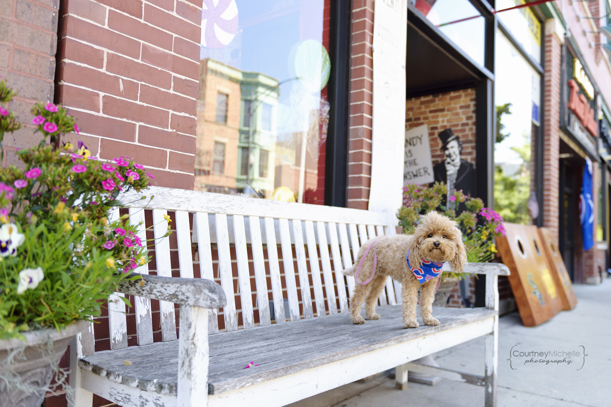 chicago-pet-photographers-courtney-laper-teacup-doodle-southport-avenue-candyality-COPYRIGHTCMP_Diogi-2019-07-12-3718-61.jpg