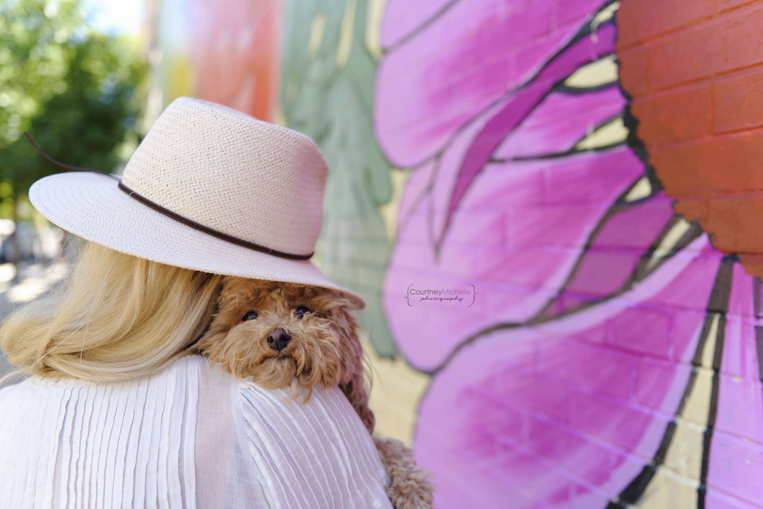 chicago-pet-photographers-courtney-laper-teacup-doodle-southport-avenue-COPYRIGHTCMP_Diogi-2019-07-12-3768-69.jpg