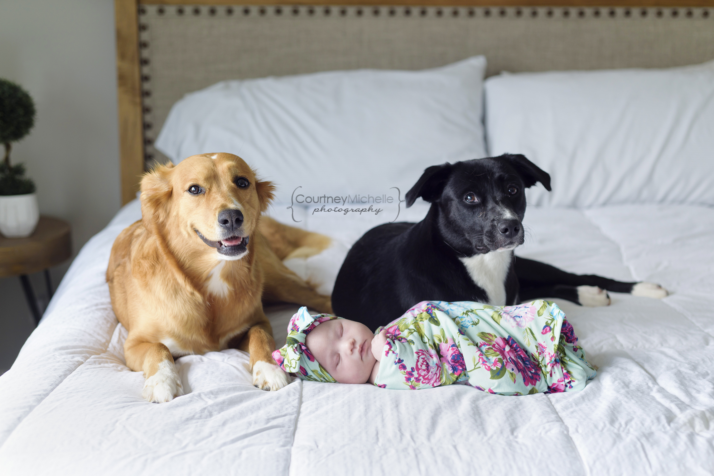 newborn on bed with two dogs