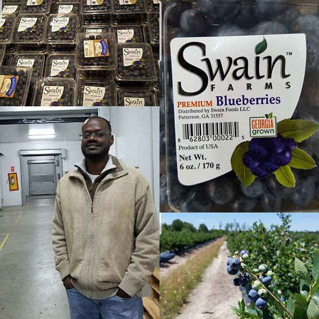 #repost, @profstudent thank you for the feature. --------------- Black Farmers-Johnnie Swain-first black-owned berry marketing company in the state of GA and possibly the first in the country.  My parents grew up farming. My dad still grows food in the flower beds in the front yard and garden in the back of his home. However, Americans in general have moved further and further away from our connection to the land. Farming, fishing, and forestry occupations are one of the least diverse employment fields according to the Bureau of Labor Statistics(#2). Outside of Johnnie, I know of only one other Black larger scale commercial farmer.  In 1920, Black farmers represented 14 percent of U.S. farmers owning 15 million acres; today, according to 2012 data from the USDA, they represent just 1.4 percent of the country's farmers owning 3.6 million acres. In 2016, after working over 15 years in marketing, advertising, and brand management, Johnnie Swain @johnnieswain left the corporate world to begin farming full time. He started Swain Farms @swainfarms, a blueberry farm in South Georgia. In addition to starting the farm, he also started Swain Foods, the first black-owned berry marketing company in the state of GA and possibly the first in the country. Today, Swain Foods markets blueberries for growers throughout the state of GA under the brand name Swain Farms. From late-April through Mid-July Swain Farms blueberries can be found from South Florida to Canada.  #swainfarms #BHM #BlackHistoryMonth #BlackHistoryAroundMe