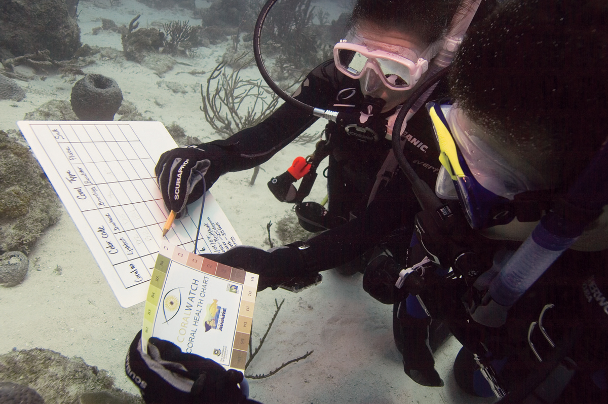 become-padi-assistant-instructor-scuba