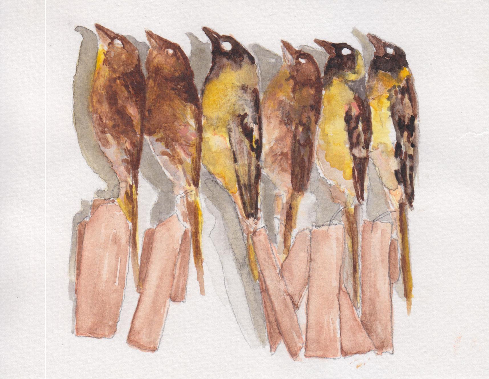 Dunn_goldfinchgroup_watercolor.jpg