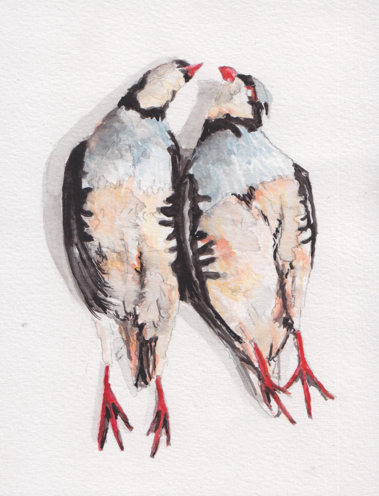 Dunn_grouse_watercolor.jpg