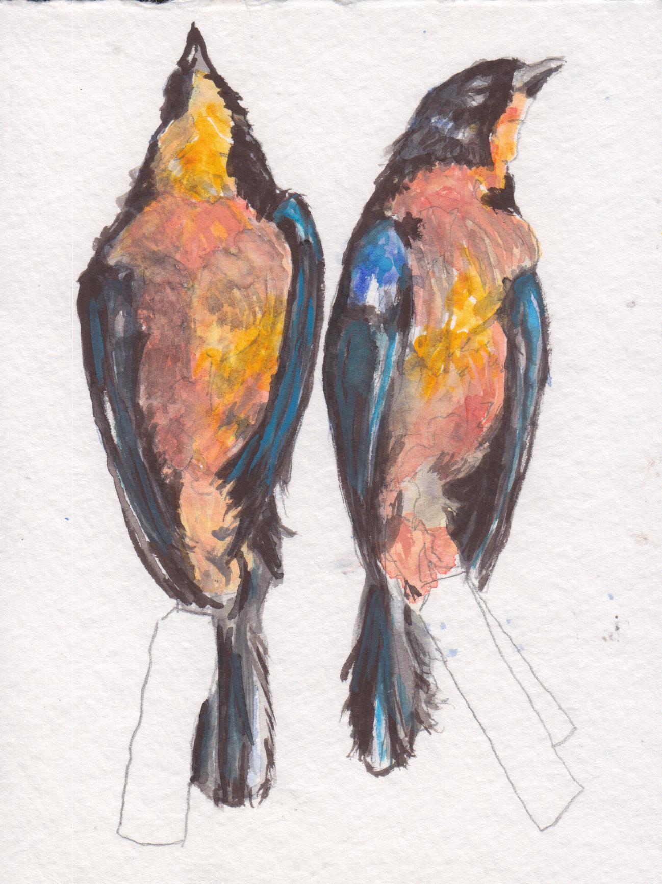 Dunn_Robins_watercolor.jpg