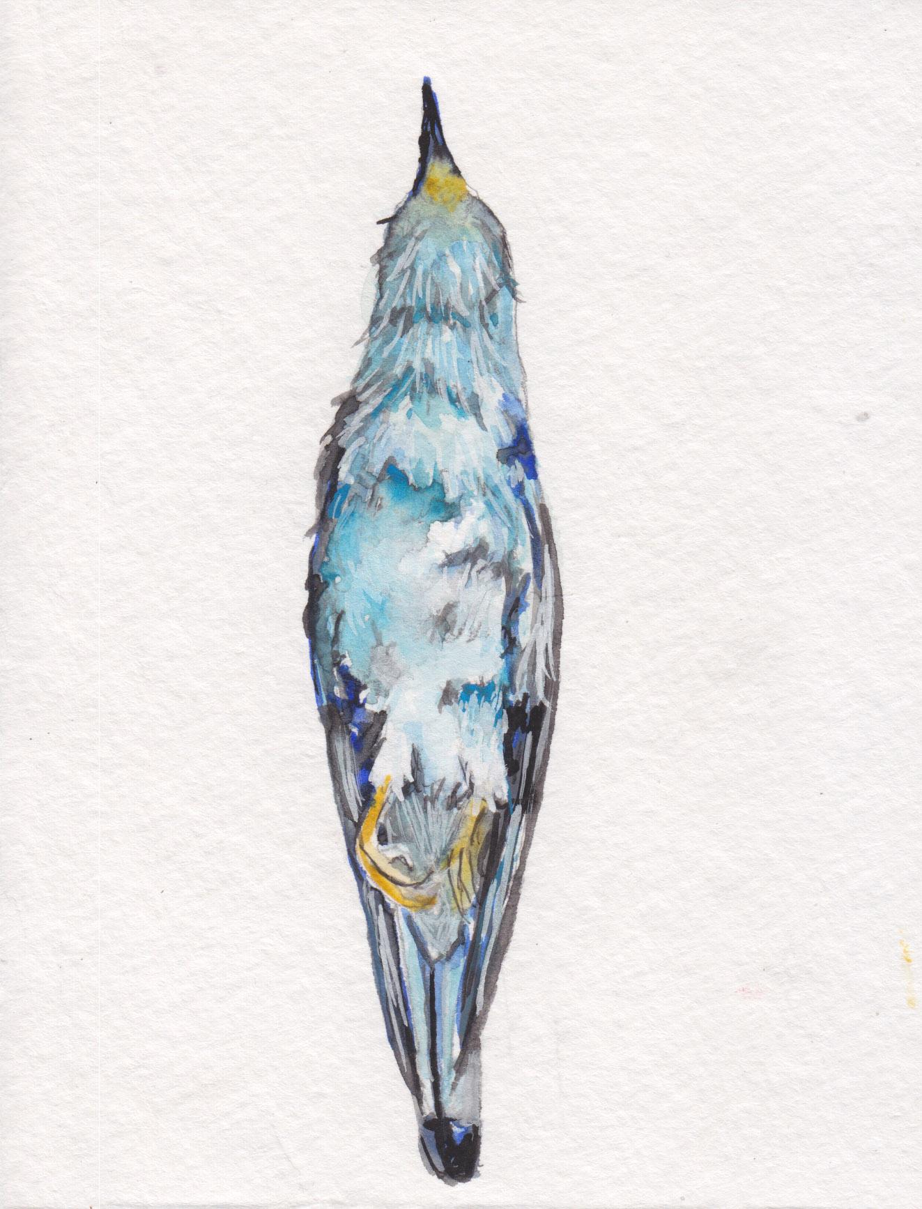 Dunn_sparrow_watercolor.jpg